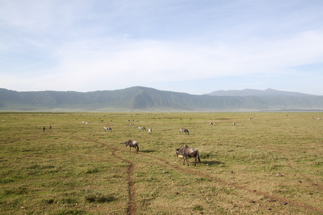 Ngorongoro Crater Animals
