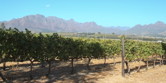 Get Your Wine On: Cape Town