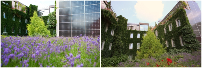 Lavender roof at Boutiquehotel Stadthalle