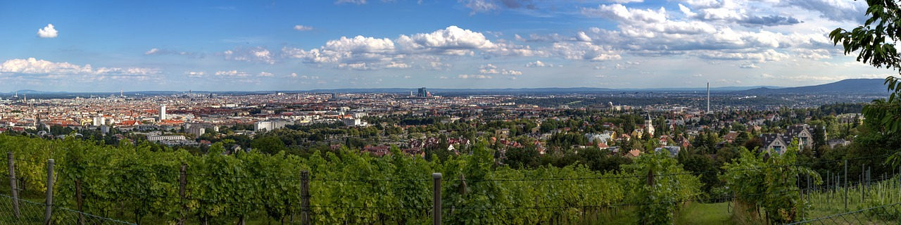 View of Vienna from vineyards